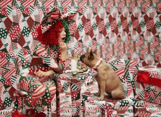 Sia pomaga polskim psiakom. Wyjątkowa akcja 6 grudnia