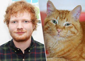Ed Sheeran założył konto na Instagramie dla swoich kotów (ZDJĘCIA)